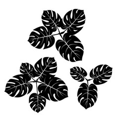 tropical monstera palm beach leaves flat style vector image