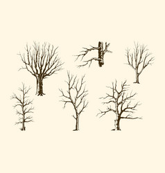 trunks of trees set vector image