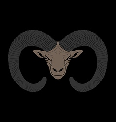 Ovis mouflon vector
