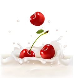 Red cherries fruits falling into the milky splash vector image