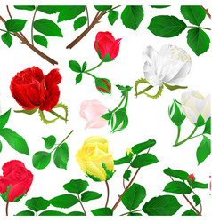 seamless texture rosebuds red yellow white vector image