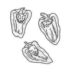 sliced bell pepper sketch vector image