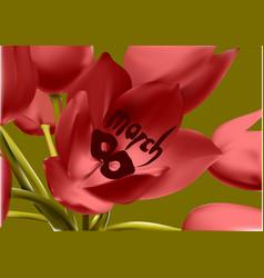 tulip in 8 march vector image