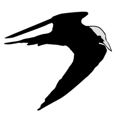 black silhouette of tern vector image vector image