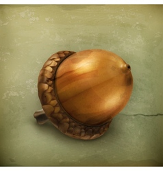 Acorn old style vector