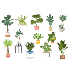 Set potted palm trees ficus agave monstera vector