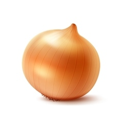 Whole Yellow Onion Bulb on White Background vector