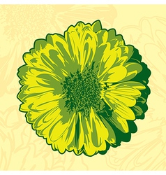 Yellow gerbera vector image