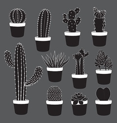 Cactus and Desert Plants Collection vector image vector image