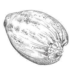 Hand drawing seashell-20 vector
