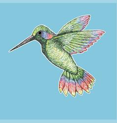 Hummingbird drawing vector