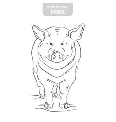 Pig hand-drawn vector