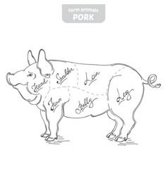 pig hand-drawn vector image