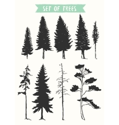 Hand drawn silhouette pine and fir trees vector image vector image