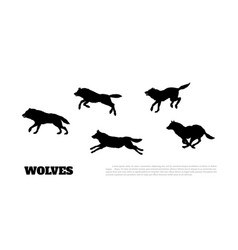 Black silhouettes of flock of wolves vector