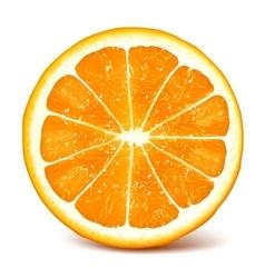 Fresh ripe orange vector