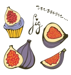 Hand drawn figs and fig cupcake vector