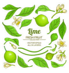 lime elements set vector image