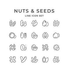 set line icons of nuts and seeds vector image