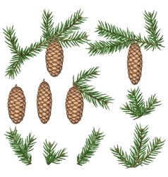 Set of fir branches and cones Detailed vintage vector