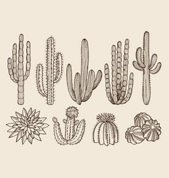 Sketch hand drawn of cactuses and vector