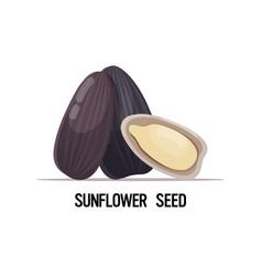 Sunflower seeds organic healthy vegetarian food vector