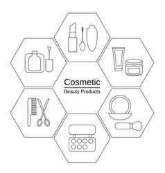 beauty and makeup infographics beauty and makeup vector image