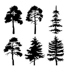 decorative vegetation a city park or garden vector image