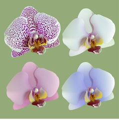 four isolated flowers of orchids vector image
