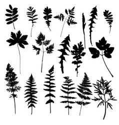 set of plants and leaves silhouettes vector image