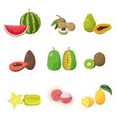 tropical exotic fruits set various exotic fruits vector image