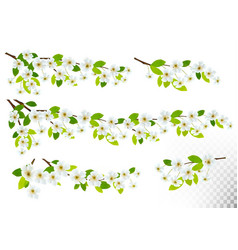 set of nature backgrounds with spring blossom of vector image vector image