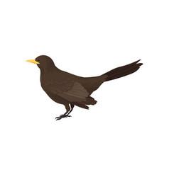 Detailed icon of male blackbird wild bird vector
