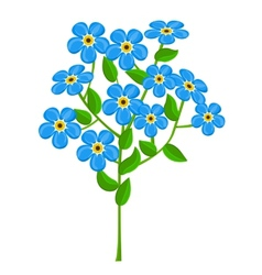 Forget-me-nots isolated on white background vector