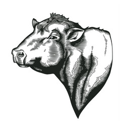 Head of bull of dangus breed drawn in vintage vector