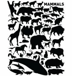 mammals vector image