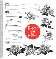 Set of white roses and ribbons in engraving style vector