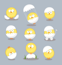 set from chicken in shell on white background vector image
