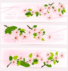 three spring pink borders with pink blossom vector image vector image