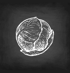 Chalk sketch brussel sprout vector