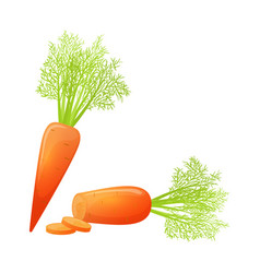 colorful cartoon sliced carrot vector image