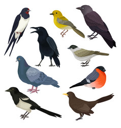 detailed icons of different species of vector image