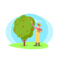 farmer picking fruit from tree in garden cartoon vector image