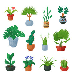 Plants in flowerpots potted flowery vector
