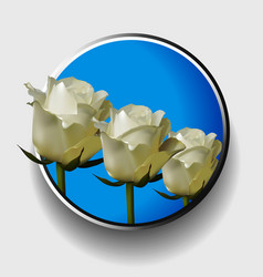 Trio of white roses over blue metallic border vector