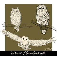 Set of isolated hand-drawn owls 2 vector
