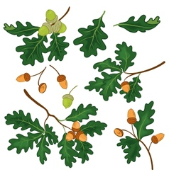 Oak branches with leaves and acorns vector image vector image