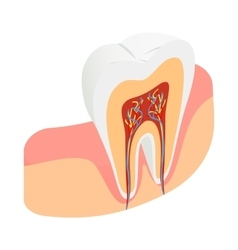 Tooth cross section icon isometric 3d style vector