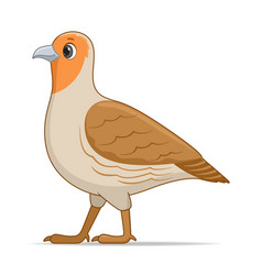 grey partridge bird on a white background vector image