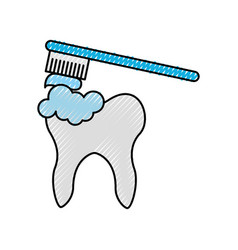 human tooth with toothbrush vector image